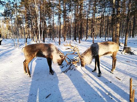 鄂温克驯鹿园旅游景点攻略图