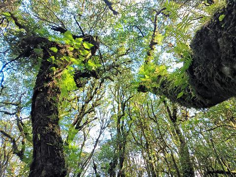 金山原始森林旅游景点图片