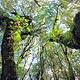 金山原始森林