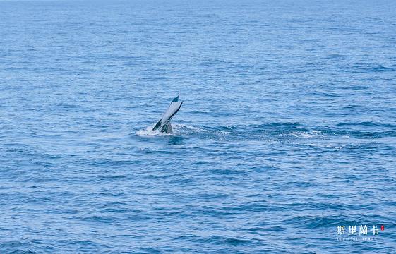 美蕊沙出海观鲸旅游景点图片