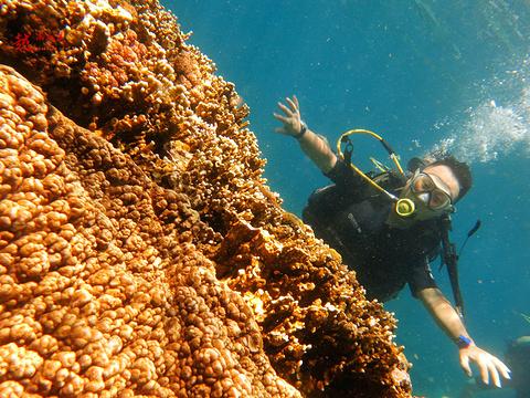 黑岛潜水体验