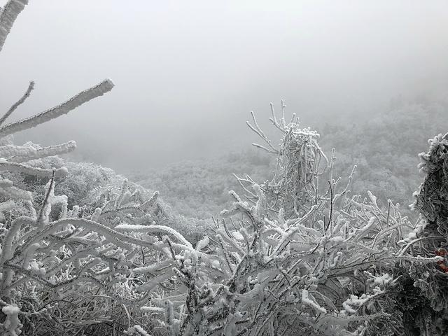 """""""不过这风景超好啊!门票、食宿一站搞定。下车后居然还要走!居然看到了雾凇。下车后就感觉在冰箱里_祝融峰""""的评论图片"""