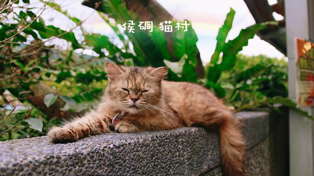 侯硐车站旅游景点图片