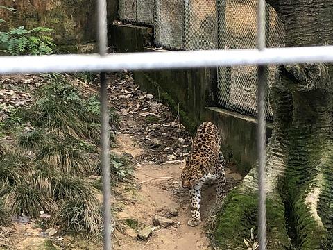 雅戈尔动物园旅游景点图片