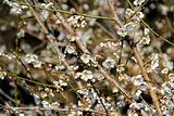 石门国家森林公园赏花