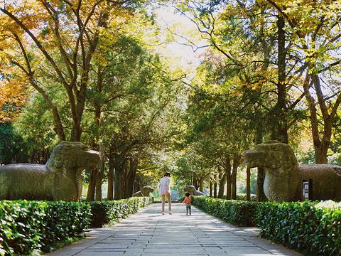 明孝陵神道旅游景点图片