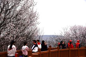 春风十里,花中等你 | 第十六届宁夏固原六盘山山花节今日正式启动!
