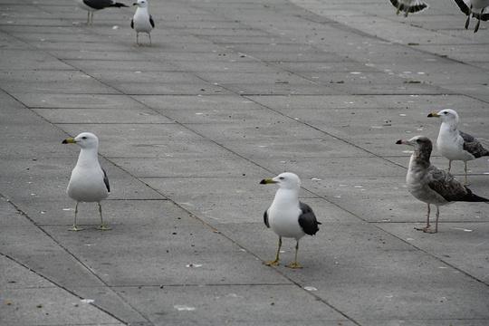 星海广场旅游景点图片