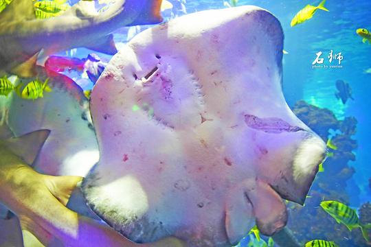 石狮海洋世界旅游景点图片