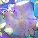 石狮海洋世界