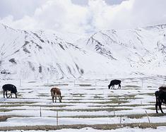 新疆,给我你的青草繁生、林海雪原、戈壁沙丘