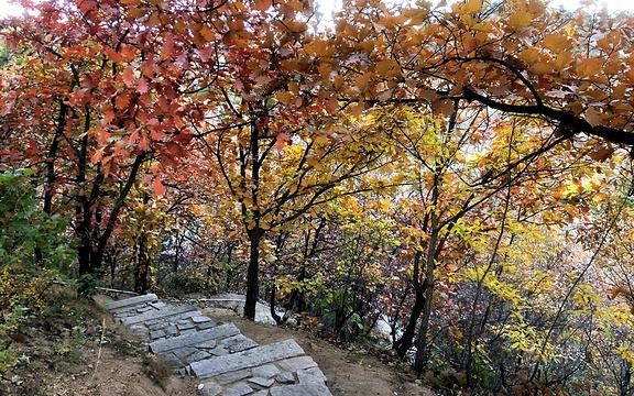 银山塔林旅游景点图片