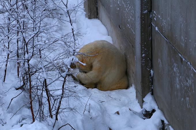 拉努阿野生动物园图片