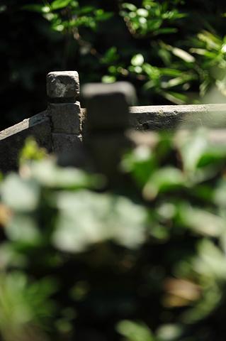 """""""经典景点:醉园、石皮弄、烟雨长廊_西塘风景区""""的评论图片"""