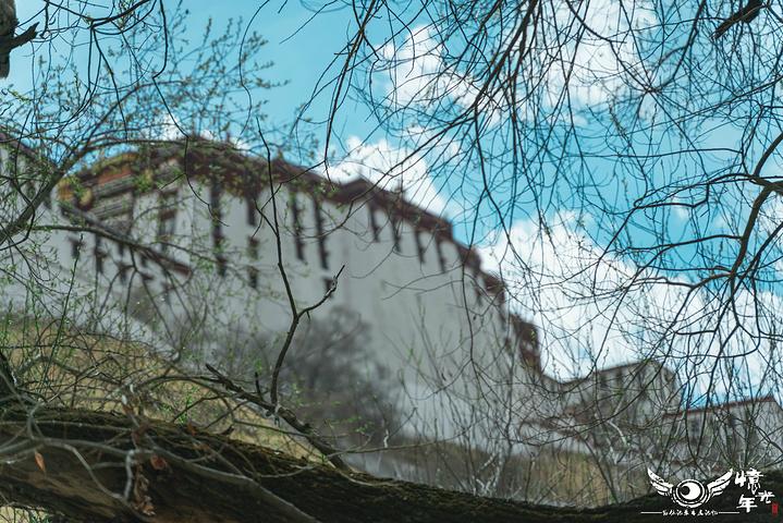 """""""布达拉宫的夜景一般都在8点20左右开灯,随着夜幕的降临,灯光也逐渐亮起,布达拉宫也随之在黑夜里..._布达拉宫""""的评论图片"""