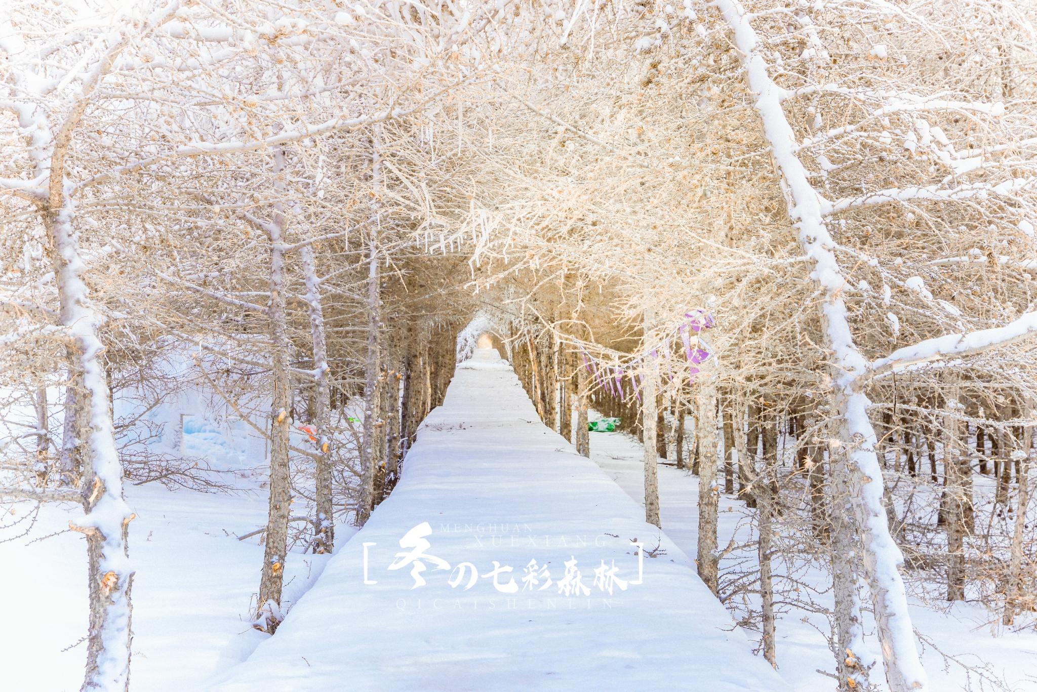 邂逅冬日七彩森林,遇见浪漫梦幻雪乡