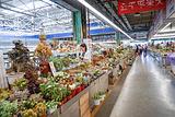 中国昆明斗南花卉市场