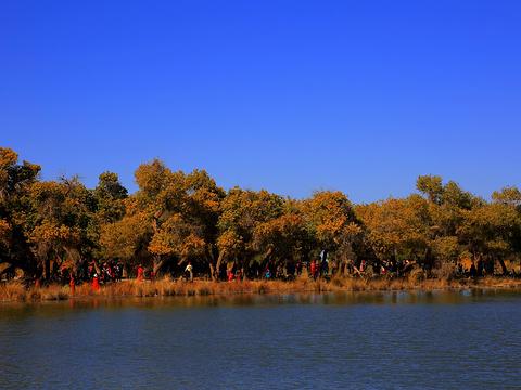 黑城弱水胡杨林景区旅游景点图片