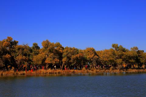 黑城弱水胡杨林景区旅游景点攻略图