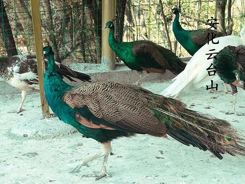 云台山风景区旅游景点图片