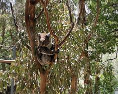 走遍澳大利亚 之 南澳 ︱逃到阿德莱德去避暑