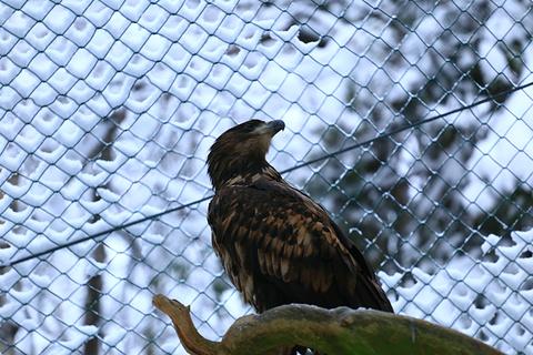 拉努阿野生动物园旅游景点攻略图