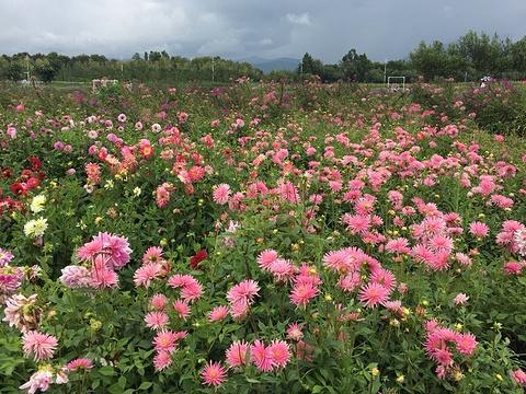 花语牧场旅游景点图片