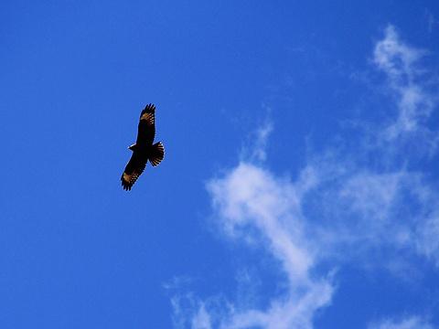 那拉提国家湿地公园旅游景点图片