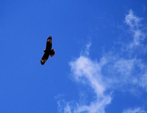 那拉提国家湿地公园旅游景点攻略图
