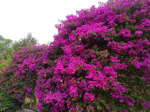 西双版纳热带花卉园-旅游购物区旅游景点攻略图
