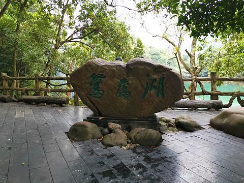 鸳鸯湖的图片