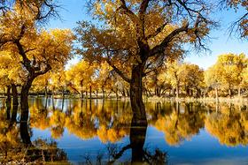最好的季节,最美的胡杨林---四川绵阳至额济纳环线之旅游记