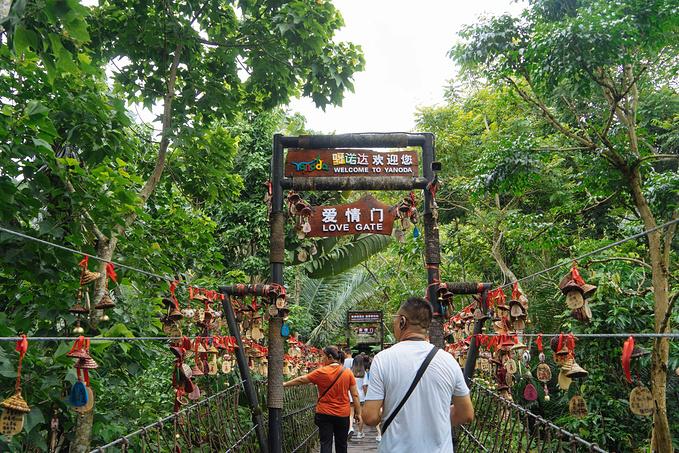 呀诺哒热带雨林图片