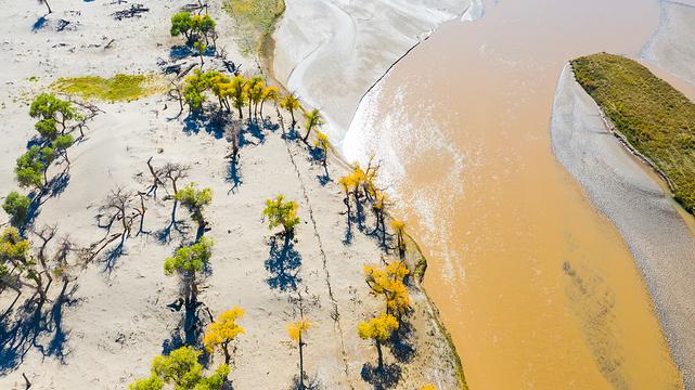 大漠胡杨旅游区旅游景点图片