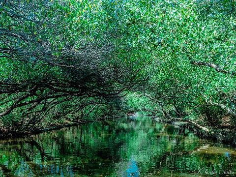 四草绿色隧道旅游景点图片