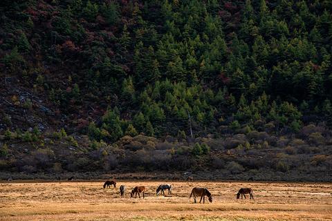 洛绒牛场旅游景点攻略图