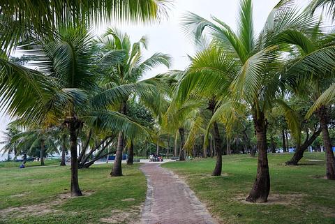 椰梦长廊旅游景点攻略图