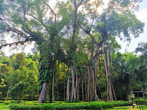 独树成林旅游景点图片
