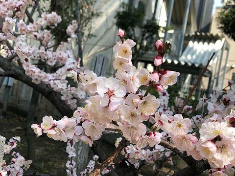 三宫神社旅游景点图片