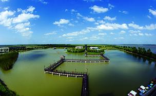 芦苇荡里的夏天(高邮湖芦苇荡湿地公园)