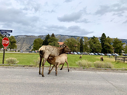一个人自驾4000公里-黄石国家公园