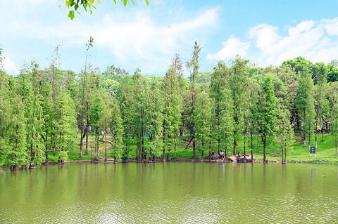 大夫山森林公园旅游景点攻略图