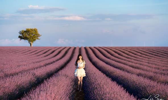 『 南法 』梦幻海岸与紫色薰衣草的追光之旅