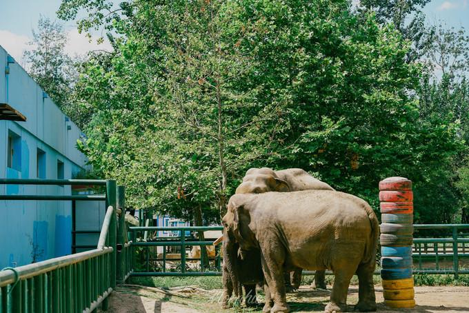 秦皇岛野生动物园图片