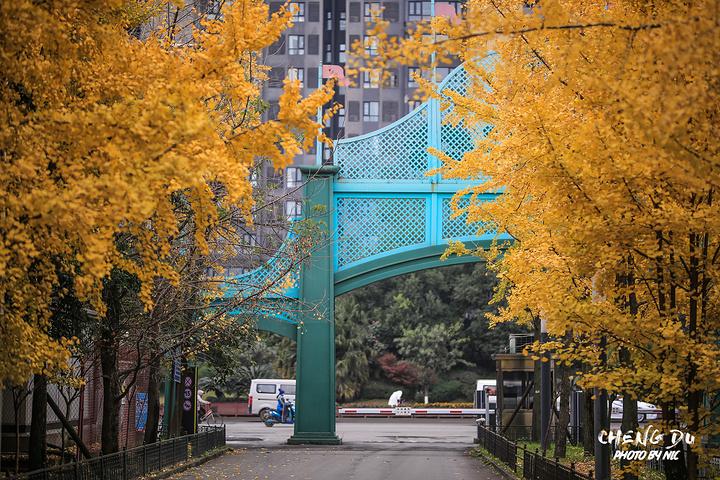 """""""比如 还有天府广场背后的办证中心的银杏也是超级漂亮。成都 还有好多这样的美地,_成都欢乐谷""""的评论图片"""