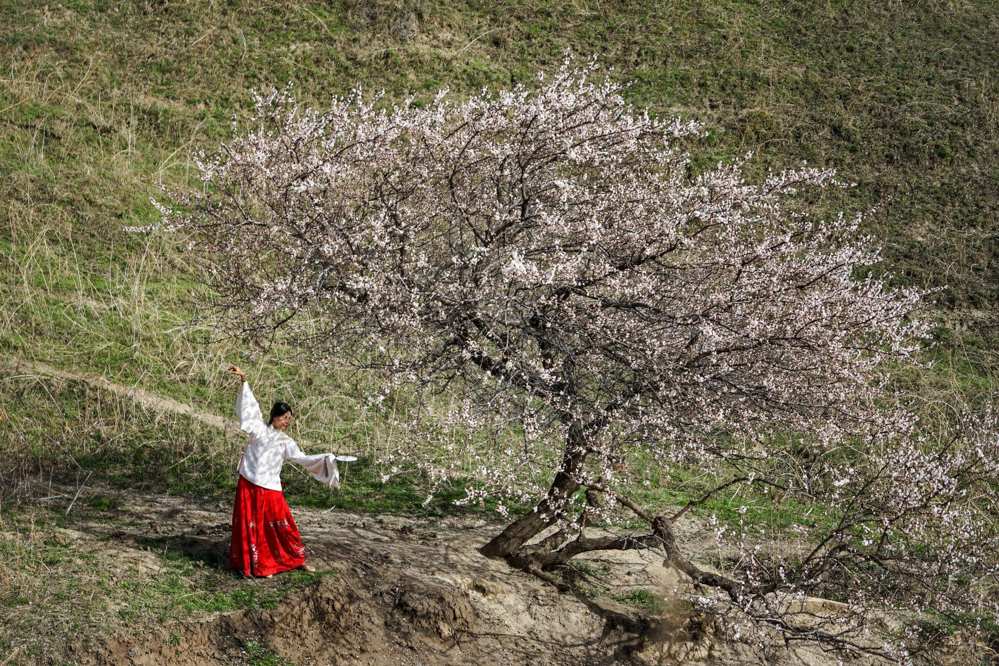 四月新疆,等一树杏花开,等一场春风来