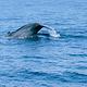 美蕊沙出海观鲸