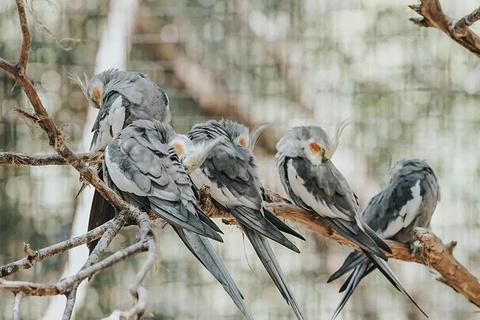 可伦宾野生动物保护园旅游景点攻略图