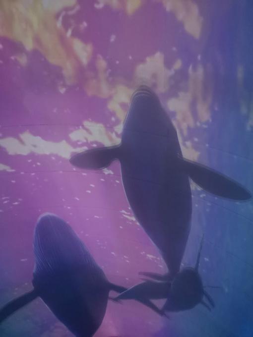 大连圣亚海洋世界图片