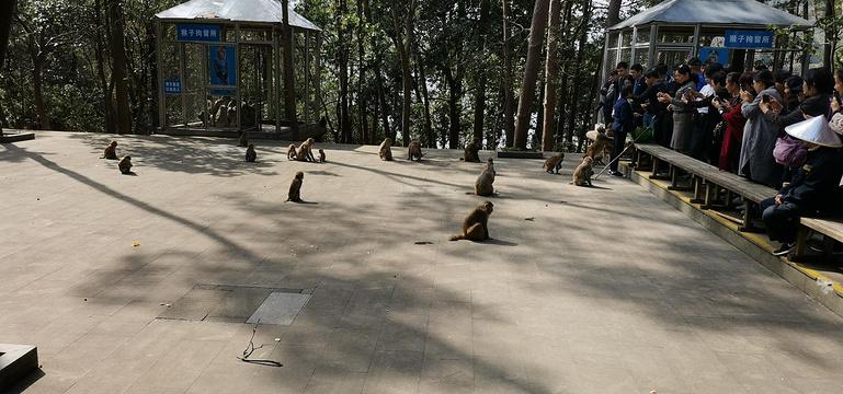 桂花岛(猴岛)旅游景点图片